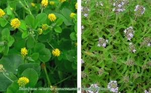 растения базифилы