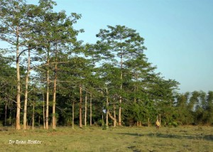 Molai woods