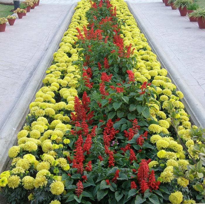 Что за цветы сажают в парках 980