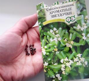 Как правильно выбрать семена