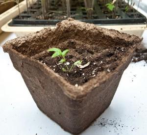 как выбрать семена