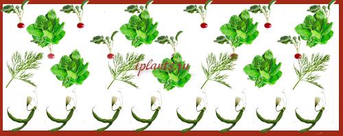 смешанные грядки - редис, шпинат, фасоль