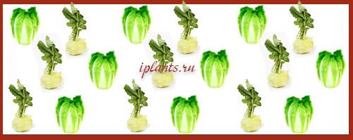 овощи на одной грядке