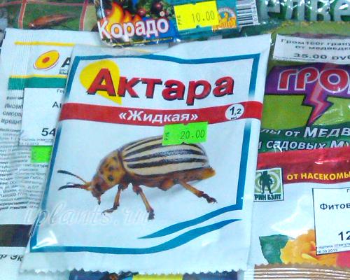 актара от колорадского жука