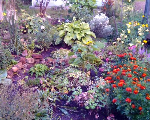 цветущий сад осенью