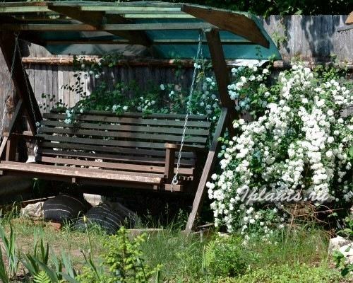 спирея в оформлении сада