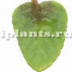 бактериоз растений