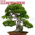 """Шаримики - """"мертвая древесина"""""""