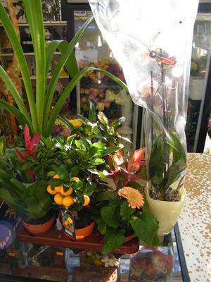 Растения в магазине