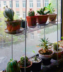 http://iplants.ru/images/kaktus-zima.jpg