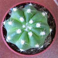 http://iplants.ru/images/kaktus1_1.jpg