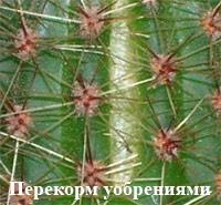 http://iplants.ru/images/kaktus9_2.jpg