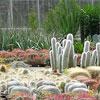 освещение кактусов