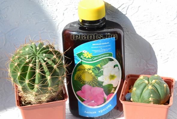 http://iplants.ru/images/kaktus_ud.jpg