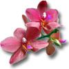 Статьи про орхидеи