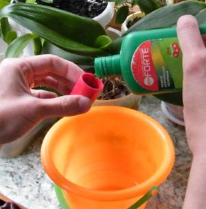 Чем подкормить орхидеи чтобы цвели