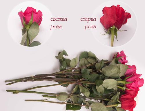 Сколько без воды могут розы