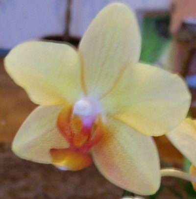 Отдали орхидею в земле